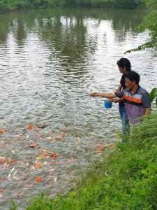 Bermodal Ketekunan, Alwi Yuni Sukses Budidaya Ikan Koi
