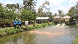 Electrifying Agriculture PLN Berhasil Dongkrak Produktivitas Budidaya Ikan Nila di Kalasan.